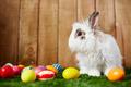 Cute Easter rabbit - PhotoDune Item for Sale