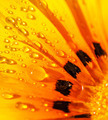 Beautiful flower background - PhotoDune Item for Sale