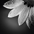 Beautiful flower border - PhotoDune Item for Sale