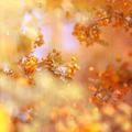 Grunge rowanberry background - PhotoDune Item for Sale