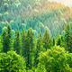Green tree forest background - PhotoDune Item for Sale