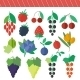 Berries Elements Set - GraphicRiver Item for Sale