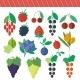 Berries Elements Set - GraphicRiver Item for Sale