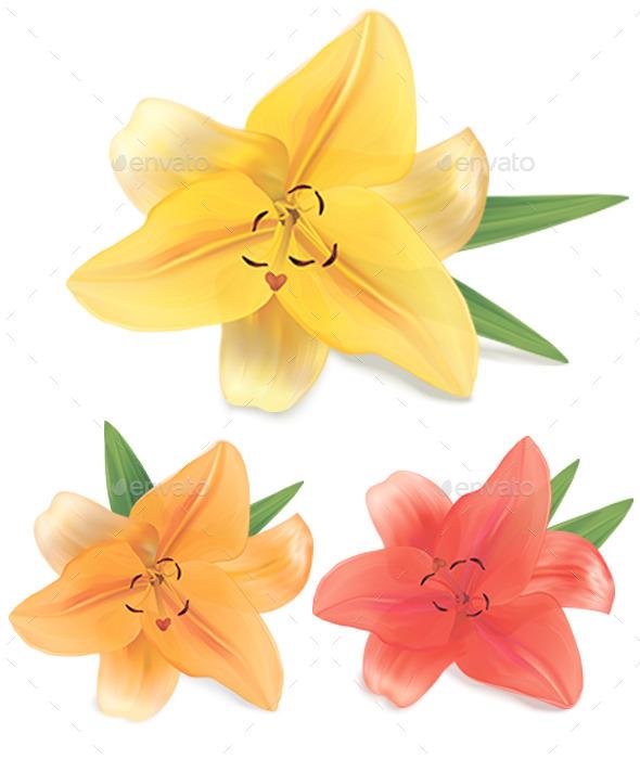 GraphicRiver Lily 10646703