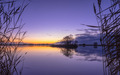 Silhouette of Reed with serene Lake during Purple Sunset - PhotoDune Item for Sale