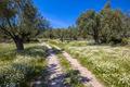 Stone path through olive grove - PhotoDune Item for Sale