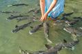 Fish Feeding - PhotoDune Item for Sale