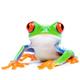 thefrog71