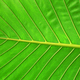 leaf background - PhotoDune Item for Sale
