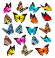 Big collection of colorful butterflies.  - PhotoDune Item for Sale