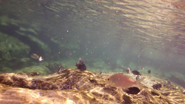 Snorkel Underwater Caribbean Beach Mexico 23