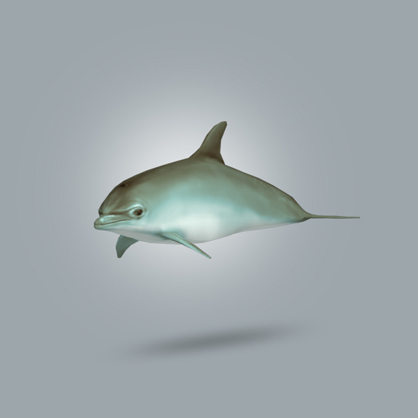 3DOcean Dolphin Lowpoly 10675970