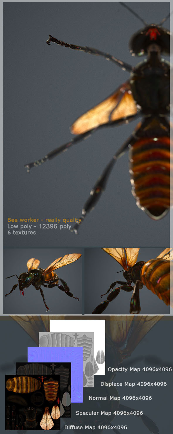 HQ low poly 3d model of bee worker for animation - 3DOcean Item for Sale