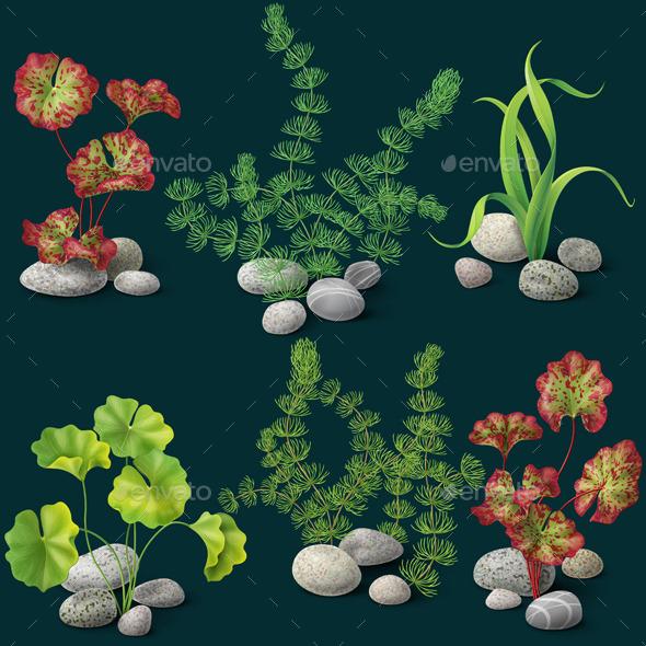 GraphicRiver Algae Set on Dark Background 10678562