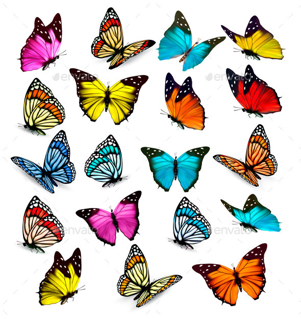 GraphicRiver Butterflies 10679969