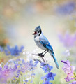 Blue Jay In The Garden - PhotoDune Item for Sale
