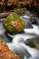 Fall Autumn Leaves Forest Stream Bubbling Brook Mossy River - PhotoDune Item for Sale