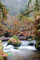 Fall Autumn Forest Stream Bubbling Brook Mossy River - PhotoDune Item for Sale