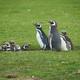 Penguin Creche - PhotoDune Item for Sale