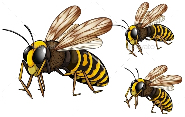 GraphicRiver Wasps 10688335