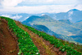 strawberries farm at Chiangmai Thailand - PhotoDune Item for Sale