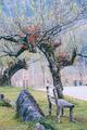 garden bench under the tree - PhotoDune Item for Sale