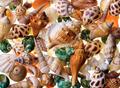 Seashells background - PhotoDune Item for Sale