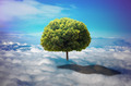 Tree in the clouds. - PhotoDune Item for Sale