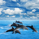 Dolphins jump - PhotoDune Item for Sale