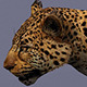 leopard animal low poly - 3DOcean Item for Sale