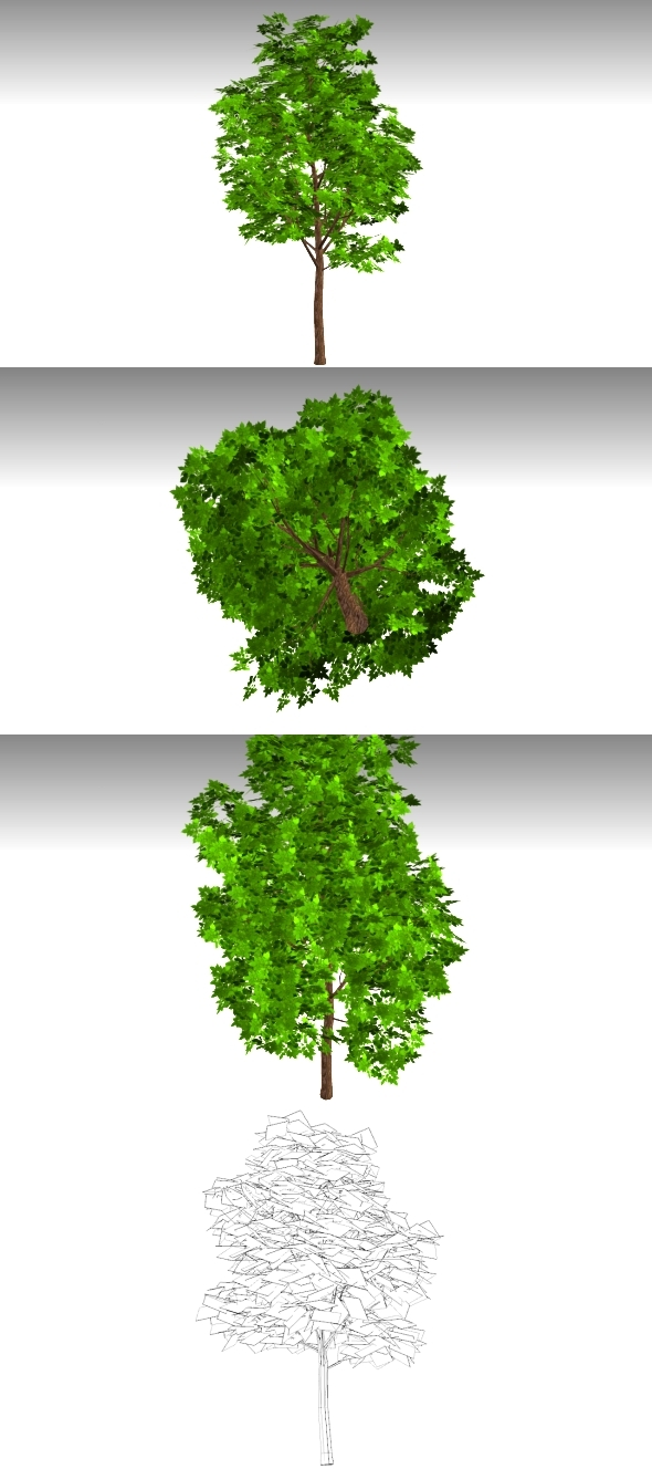 3DOcean Low Poly Tree 10717279