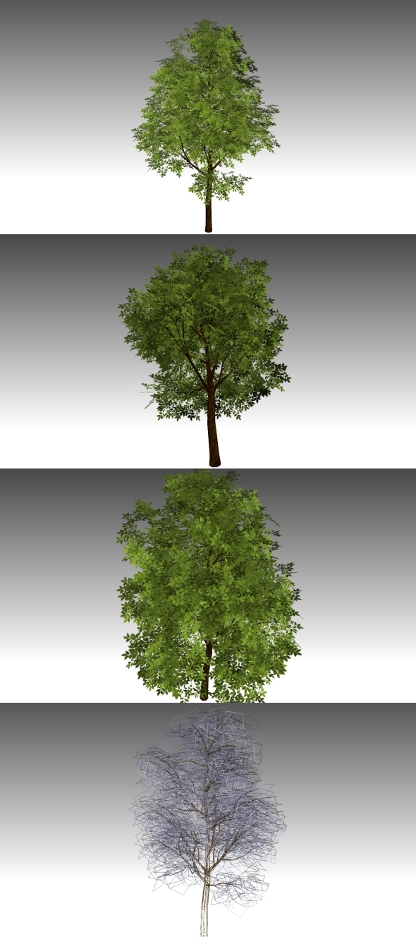 Low Poly Tree 2 - 3DOcean Item for Sale
