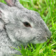 Rabbit sitting in grass, smiling at camera - PhotoDune Item for Sale