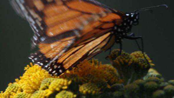 Butterfly sanctuary wedding
