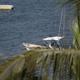 Puerto Vallarta Mexico Tourism 3 - VideoHive Item for Sale