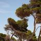 Mallorca Bosque 02 - VideoHive Item for Sale