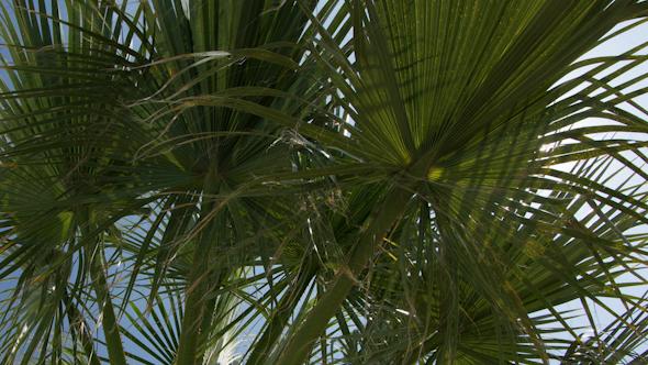 Palm Tree Sky 2