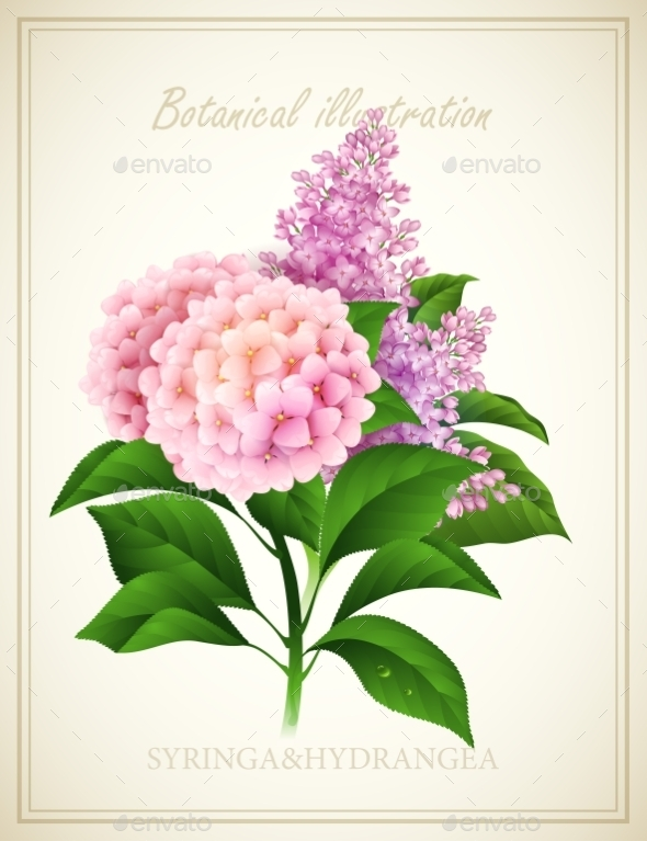GraphicRiver Syringa and Hydrangea 10739195
