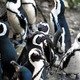 African penguins - PhotoDune Item for Sale