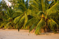 Tropical beach at Mahe island Seychelles - PhotoDune Item for Sale