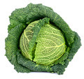 Savoy Cabbage Isolated - PhotoDune Item for Sale