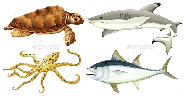 GraphicRiver Different Sea Creatures 10748240