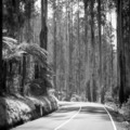 Forest Road Black and White - PhotoDune Item for Sale