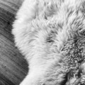 Sheepskin Black and White - PhotoDune Item for Sale