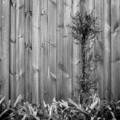 Landscape Design Black and White - PhotoDune Item for Sale