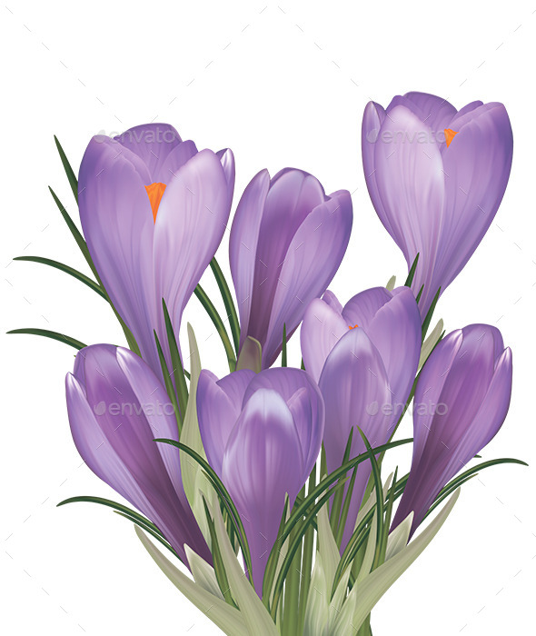 GraphicRiver Spring Bouquet of Purple Crocuses 10754289