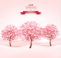 Spring background with blossoming sakura trees - PhotoDune Item for Sale
