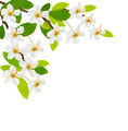 Spring background with white flowers - PhotoDune Item for Sale