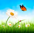Nature spring daisy flower with butterfly. - PhotoDune Item for Sale