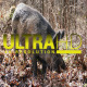 Wild Pig 3 - VideoHive Item for Sale